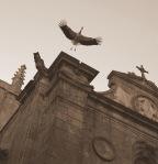 Caceres-Extremadura