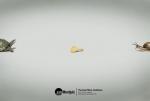 showcase-of-modern-ads-39-1