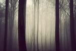 11-trees