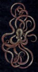 FYI-Monday-Inspiration-Sara-Blake-Octopus-482x900